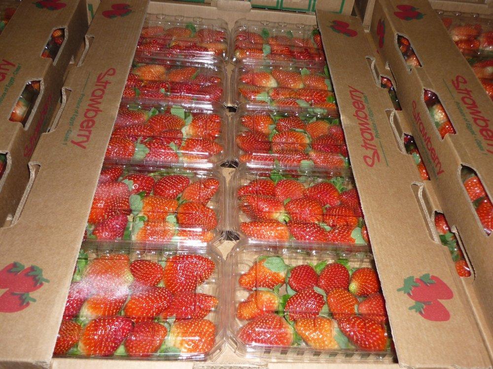 شراء Strawberry