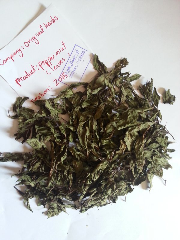 Peppermint leaves 99% purity for export, season 2015