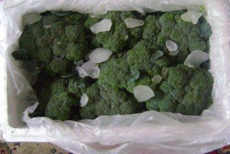 شراء Broccoli