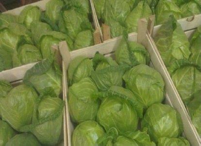 شراء Lettuce