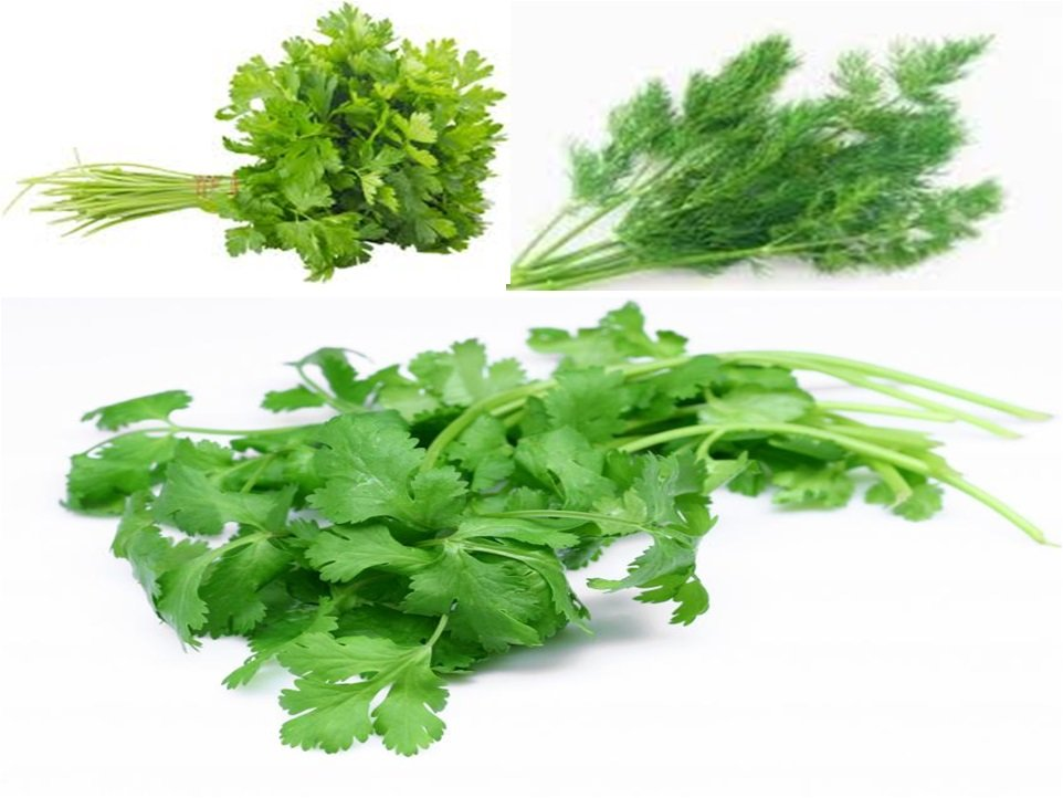 شراء Chervil / Green Coriander / Parsley