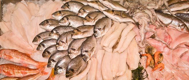 شراء تصدير الاسماك الطازجة
