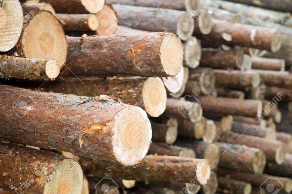 شراء Timber and wood