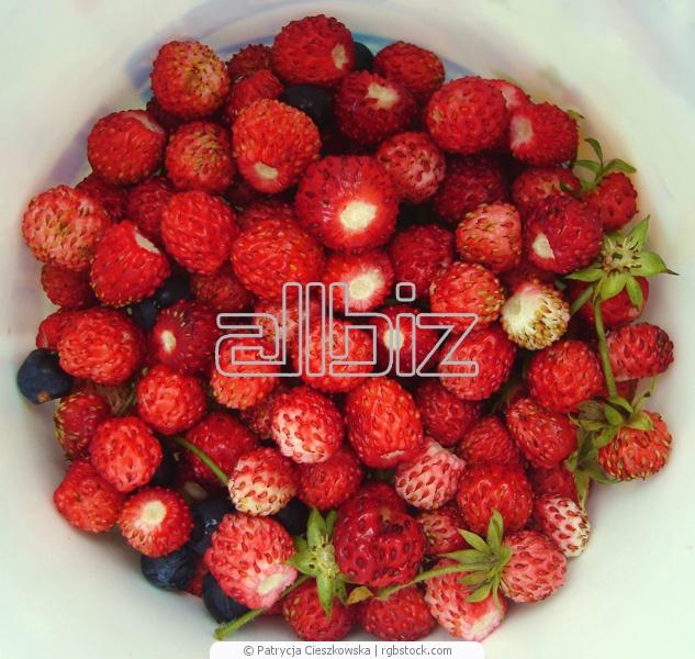شراء فراولة