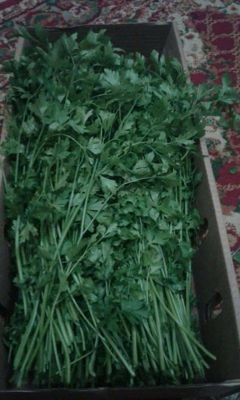 Buy Fresh parsley (fresh herbs)