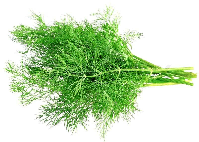Купить Свежий укроп (зелень)