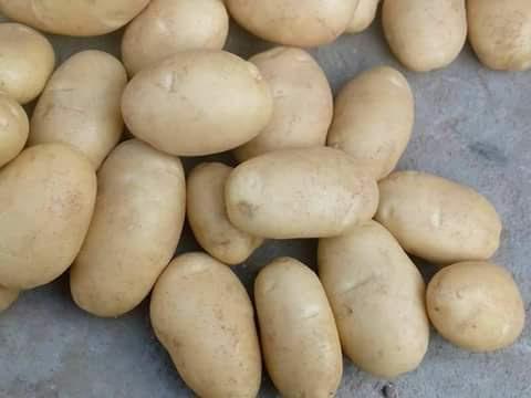Купить Картофель Asponta