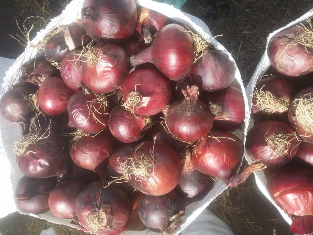 Fresh red onions