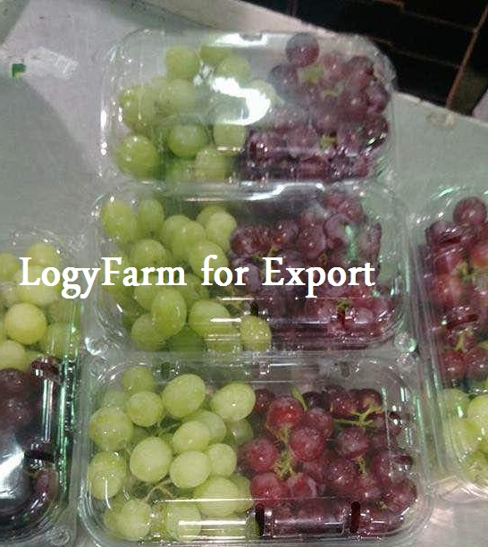 شراء Red and Green Grapes ( Superior , flame, crimson, red globe, king ruby ) high quality