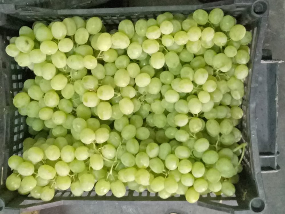 شراء Fresh Sweet grapes - crops 2019 - Class A
