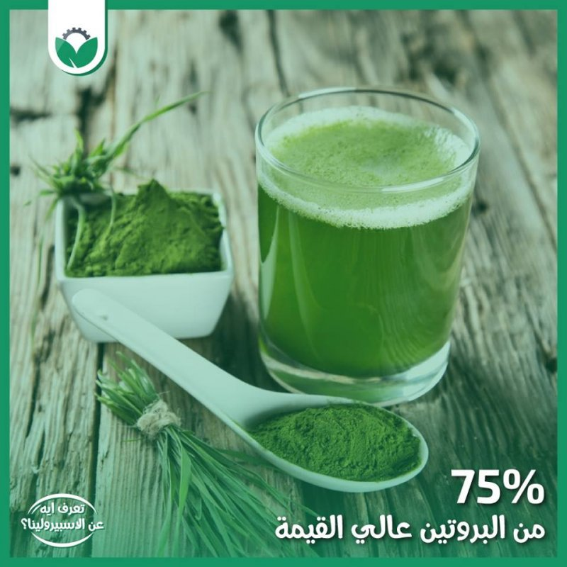 Buy Spirulina of the most important sources of protein in food
