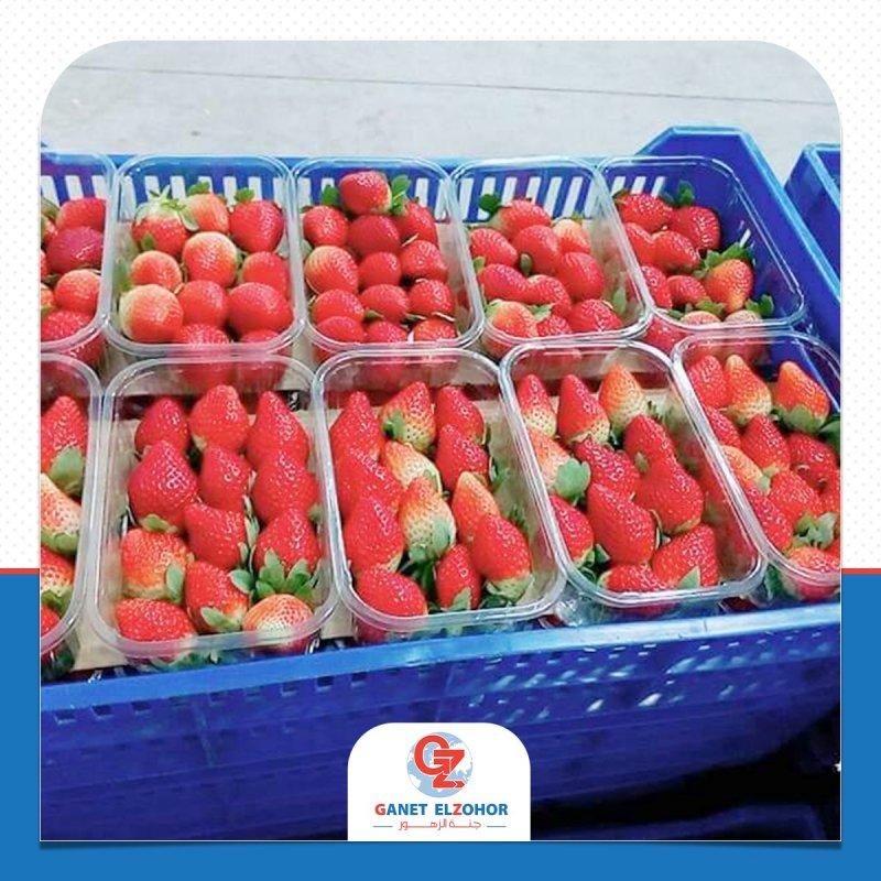 شراء Fresh strawberries