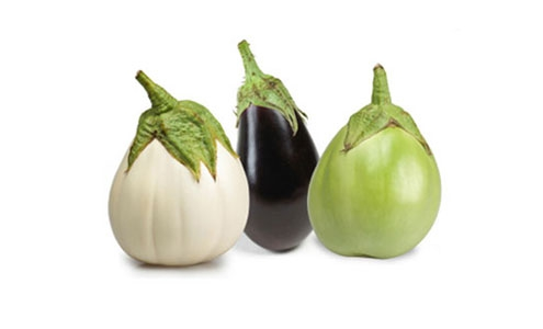 شراء Fresh Eggplants