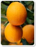 شراء Citrus