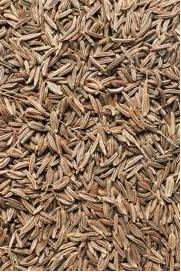شراء Caraway seeds