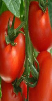 شراء Tomatoes