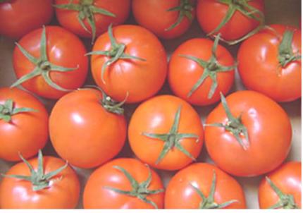شراء Tomato