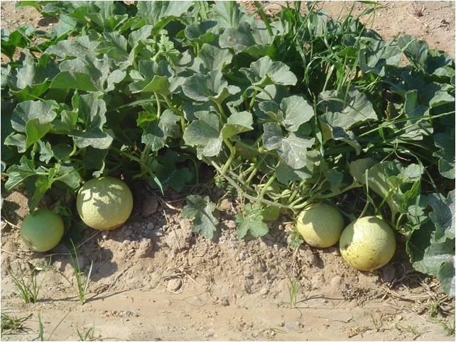 شراء منشطات حيوية لزراعة الفواكه