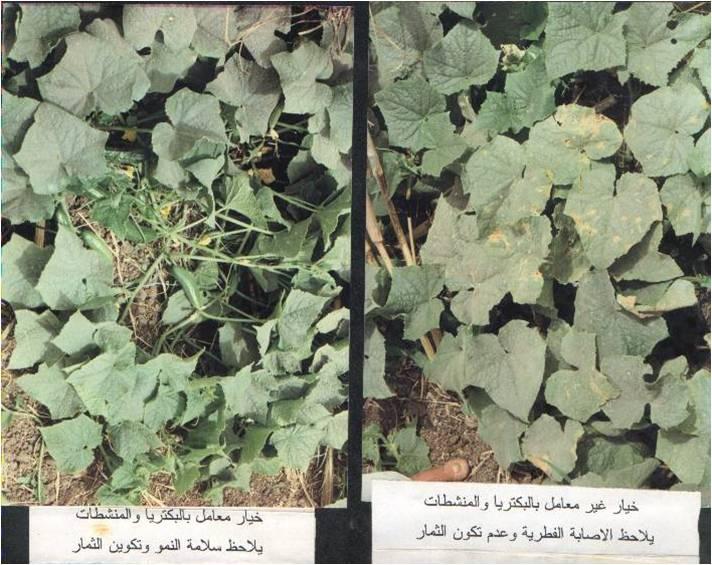 Buy Biologicals for plants