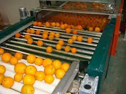 شراء فرز البرتقال لتصدير