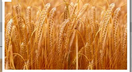 شراء استيراد محاصيل الزراعية