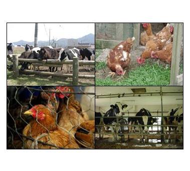 شراء Zinc Oxide Feed Grade for Animal Feed Additives: Feed grade zinc oxide is especially produced for the animal feed industry Analytical data (according to DIN 55 908)
