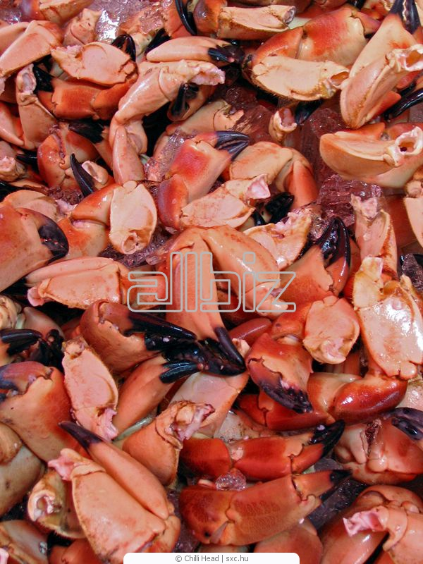 شراء Crab meat