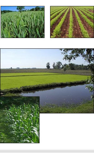 شراء Zinc Sulphate heptahydrate (ZnSo4 7H2O) for agriculture uses and animal feed additives: