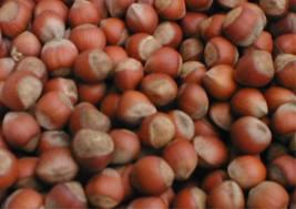 شراء Hazelnut
