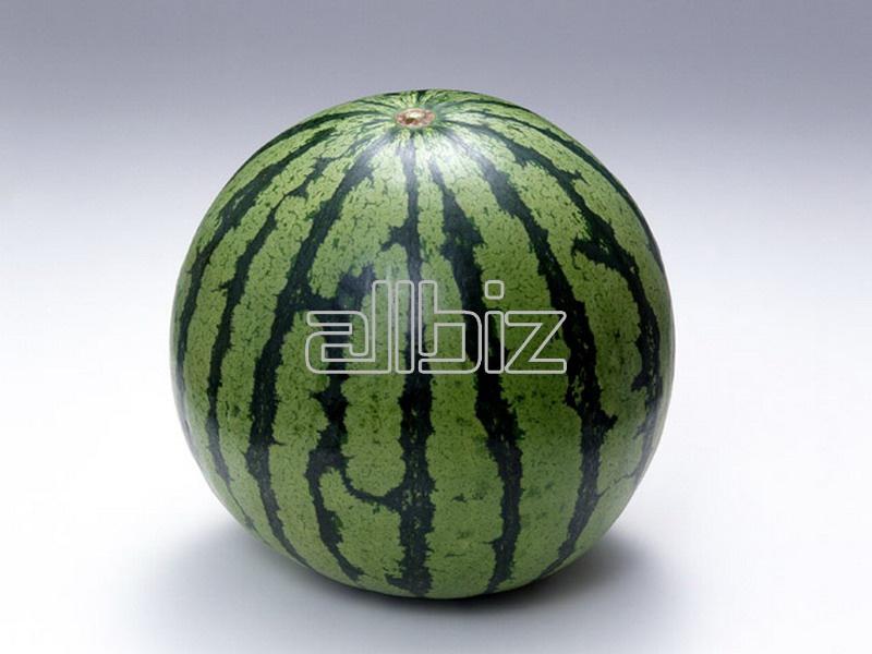 شراء Watermelon