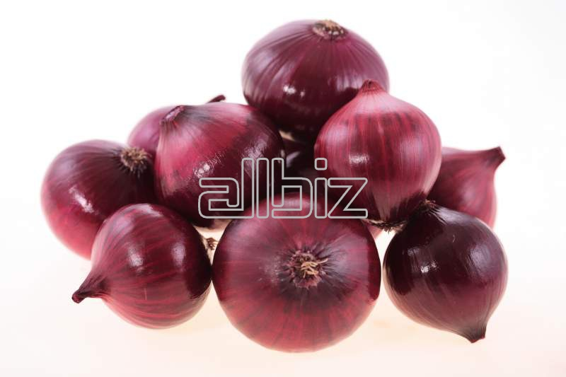 شراء Onion