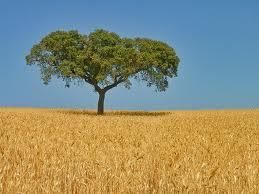 شراء ويغطي القمح ـ في أجزاء من سطح الكرة الأرضية ـ أكبر مساحة من أي محصول غذائي آخر. والدول الرئيسية المنتجة للقمح في العالم هي: كندا والصين وفرنسا والهند وروسيا وأوكرانيا والولايات المتحدة. ويبلغ الإنتاج العالمي للقمح حوالي 735 مليون طن متري في العام. وهذه ال