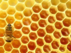 إنتاج وتعبئة نحل العسل ومنتجاته ( حبوب اللقاح - سم
