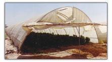 Egyptian Greenhouse