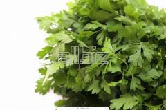Parsley (petrsellinum sativum)