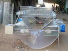 تجهيزات مزارع الارانب