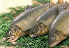 River fish