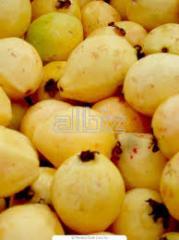 جوافة