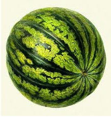 البطيخ الاحمر