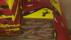 بطاطا للتصدير | مصدرين البطاطا المصريه | بطاطا