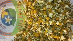 Chamomile flowers,البابونج,شيح