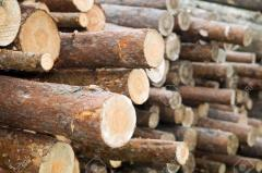 Timber and wood