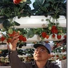 منتجات زراعية