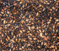 Seed(Box)