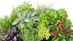 Sameh(herbs)