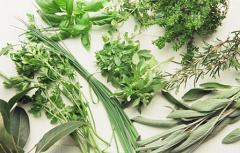 Herbs (Central Sinai)