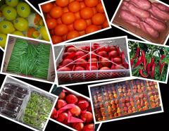 Full service export of fresh fruits and vegetables.