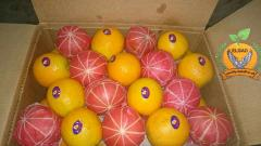 البرتقال _the Orange