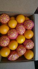 تصدير ليمون - برتقال - بطاطس - فراولة