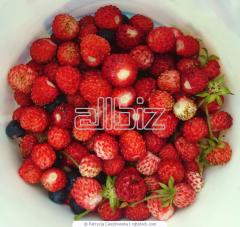 فراولة فريش - fresh strawberry
